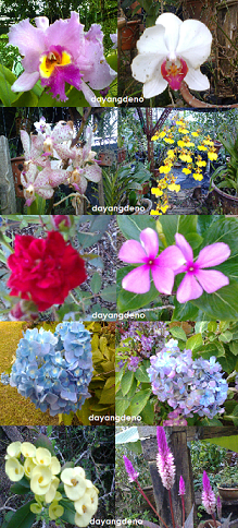 Bunga-Bunga Di Taman