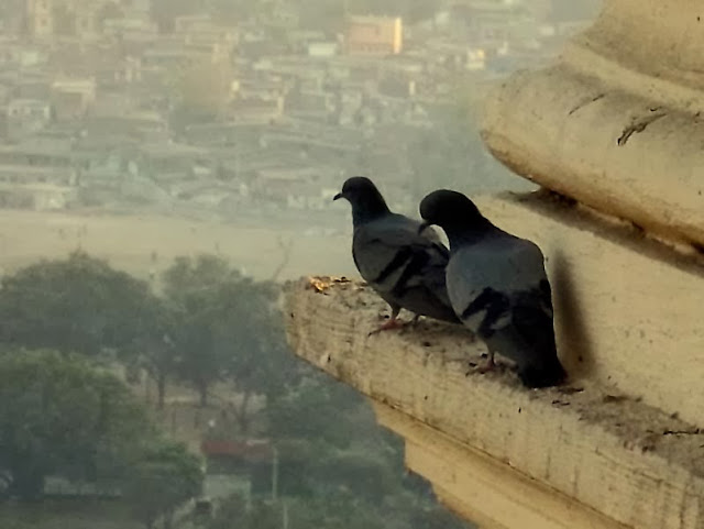 two pigeons on a ledge of a building in a city