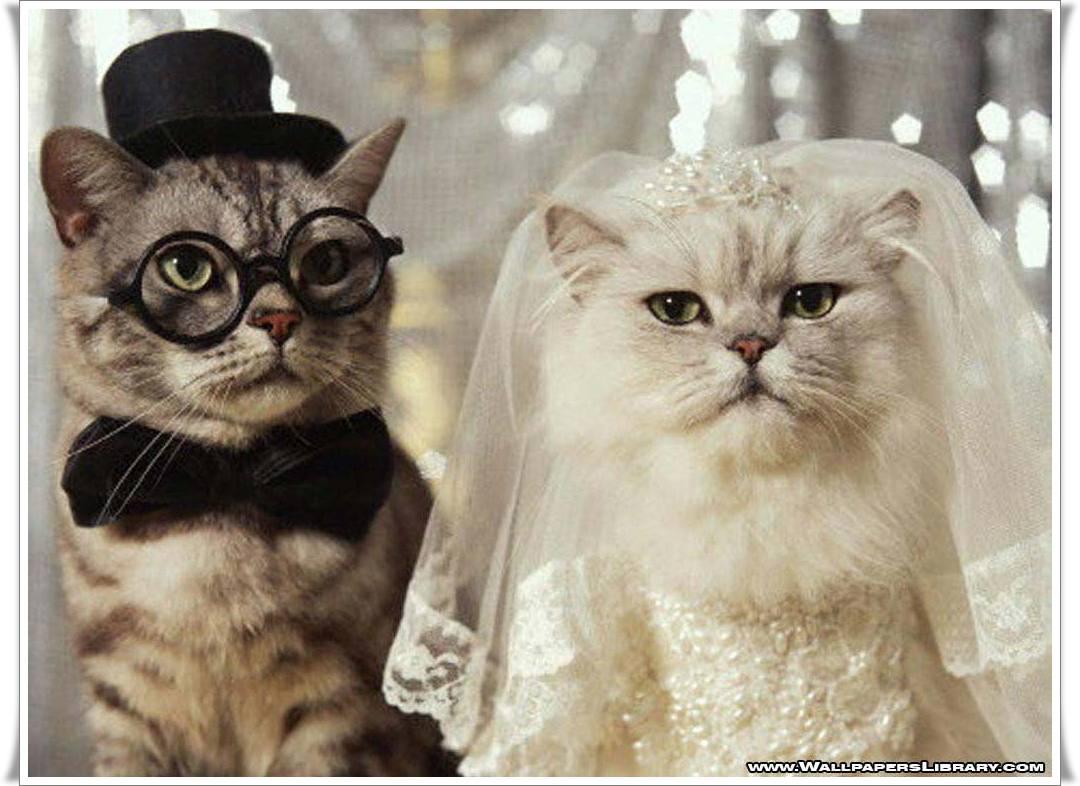 Foto Kucing Lucu Gambar Kucing Imut Manis