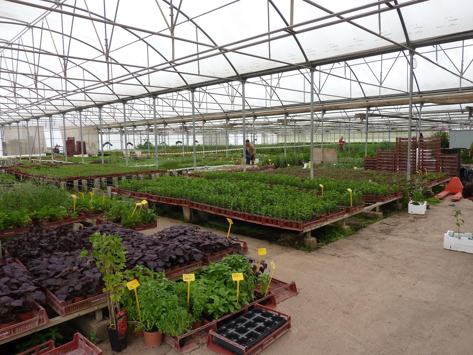 Cultiva tu huerto sin tierra la dulce revoluci n de las for Plantas que hay en un vivero
