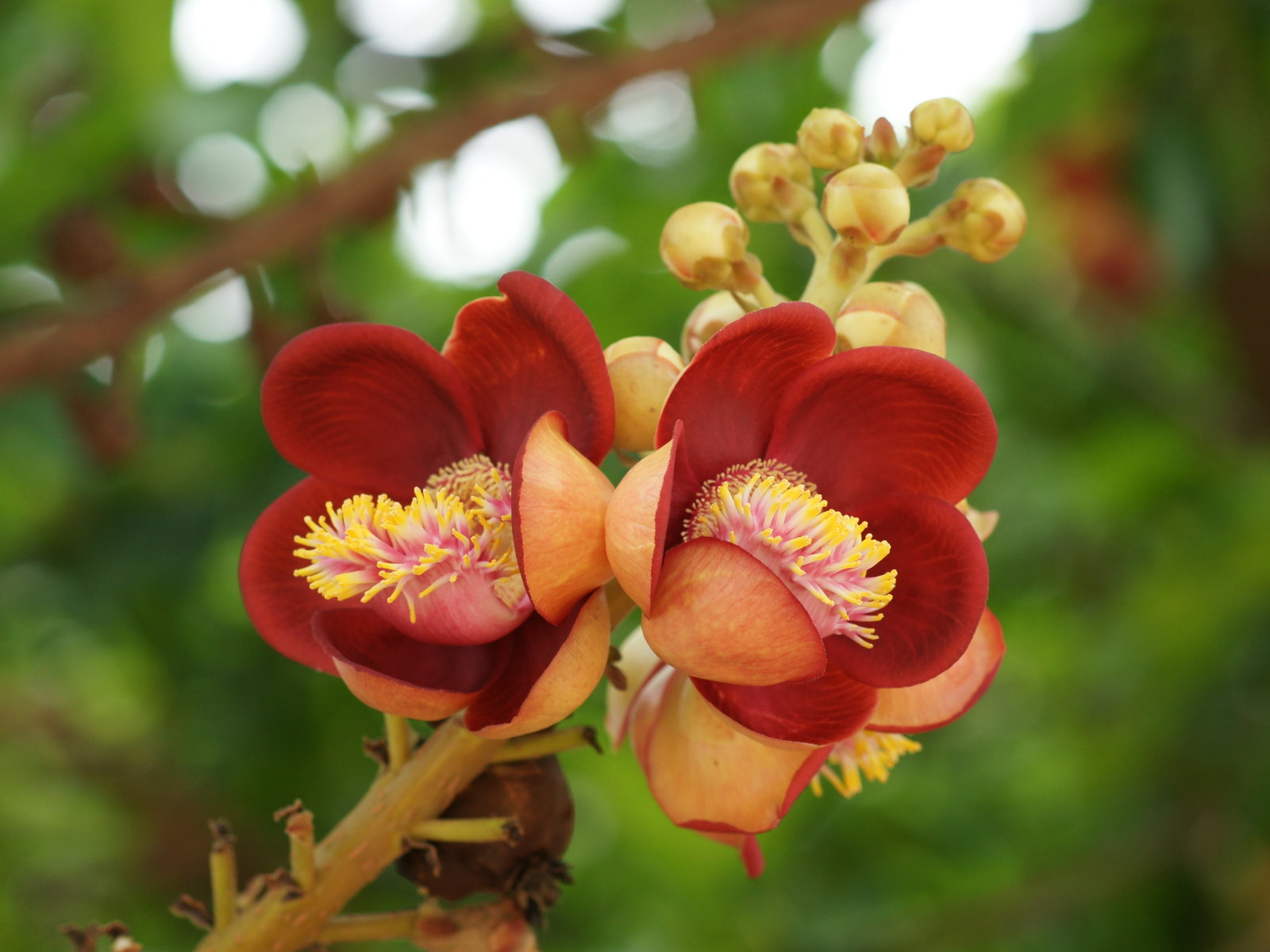 Beautiful rare flowers names comousar beautiful rare flowers names beautiful flowers izmirmasajfo Images