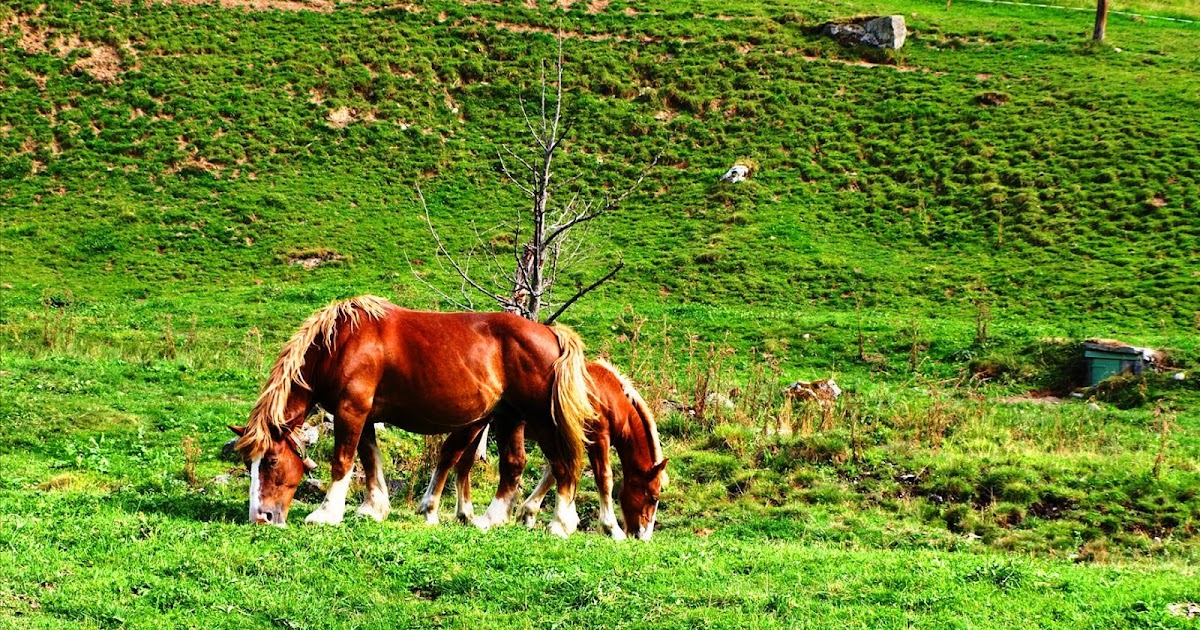 Best Pyrenees Photos  Horses - Cauteret - Pyrenees