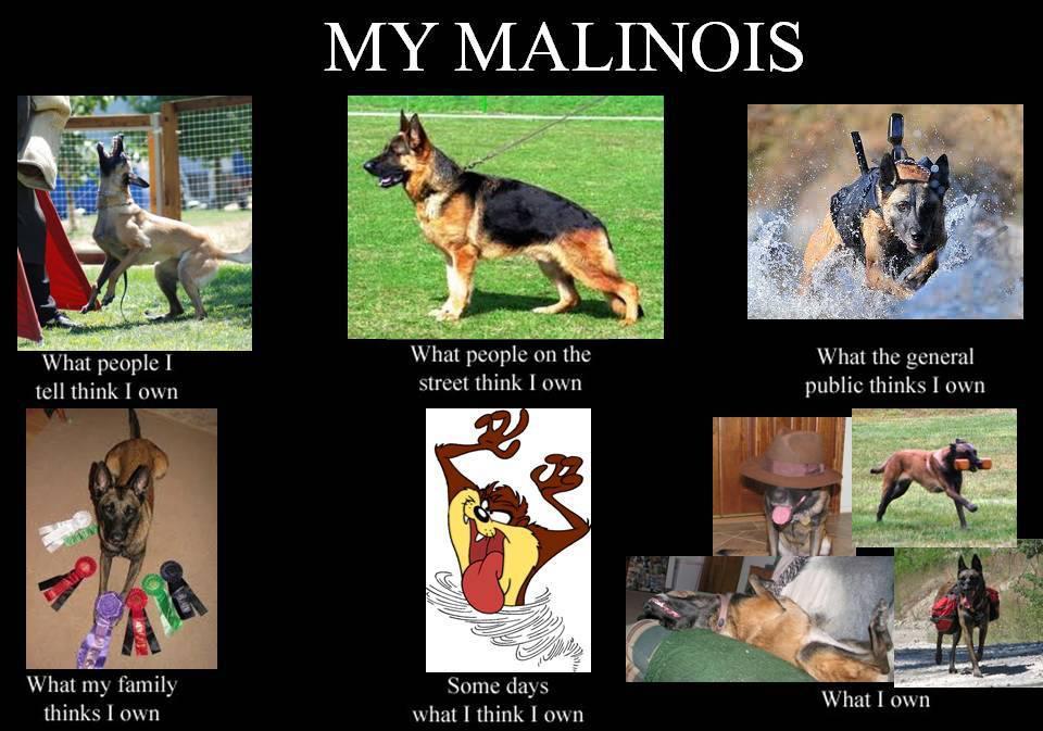 mal+do 3 dog days my first meme