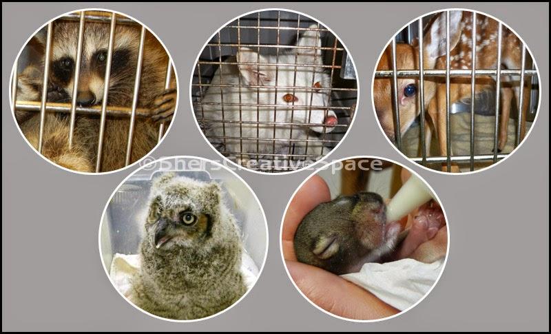 http://3.bp.blogspot.com/-T_Ap-S5VxcQ/VTwckZd7qcI/AAAAAAAAMQ0/Ov5FsolYzB0/s1600/baby_wildlife.jpg