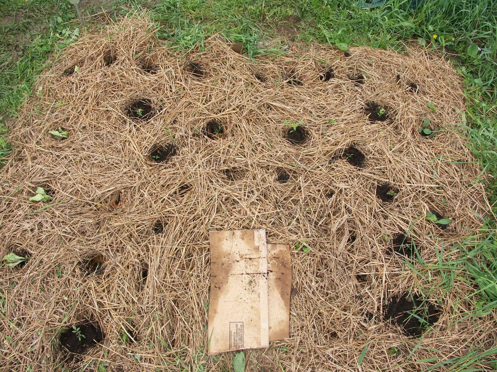 Famous Keyhole Garden Vignette - Brown Nature Garden ...