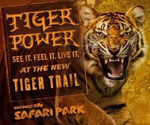 Like A Tiger