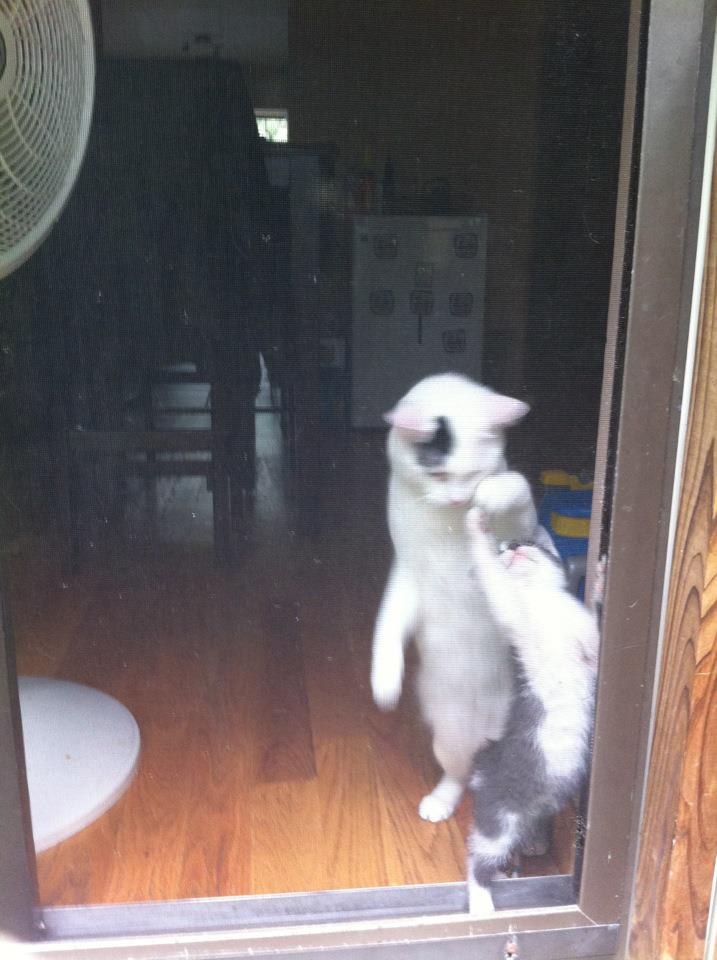 funny cat pictures, dancing cats