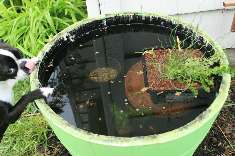Roosevelt kid d i y container fish pond for Large outdoor fish ponds
