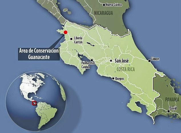 Lagarta Cobra da Costa Rica disfarce Natureza Localização