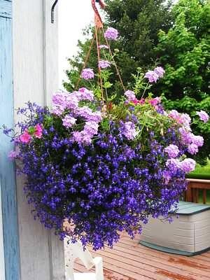 Il giardino sfumato fiori da appendere for Fiori invernali da vaso esterni