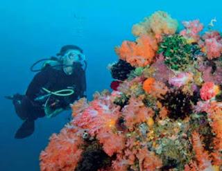 wisata bahari, bitora laut, terumbu karang, diving, pantai sekotong lombok, tempat wisata di lombok, wisata lombok,