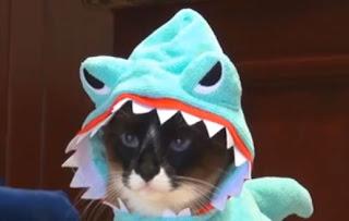 Chat déguisé en Requin sur un Aspirateur