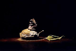 pinturas-al oleo-claro-obscuro