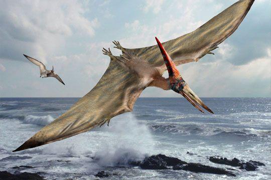 Resultado de imagen de Dinosaurios y pterodáctilos