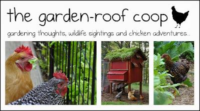 the garden-roof coop