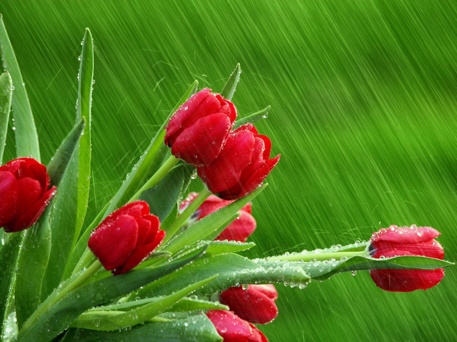 Raining Beautiful Wallpaper
