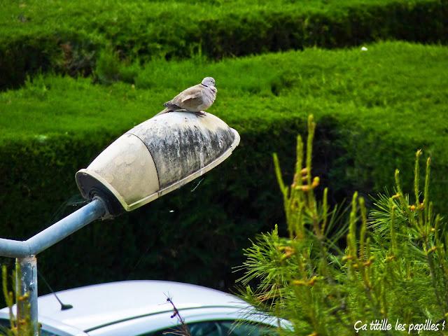 Pigeon, Lampadaire, Ça titille les papilles !