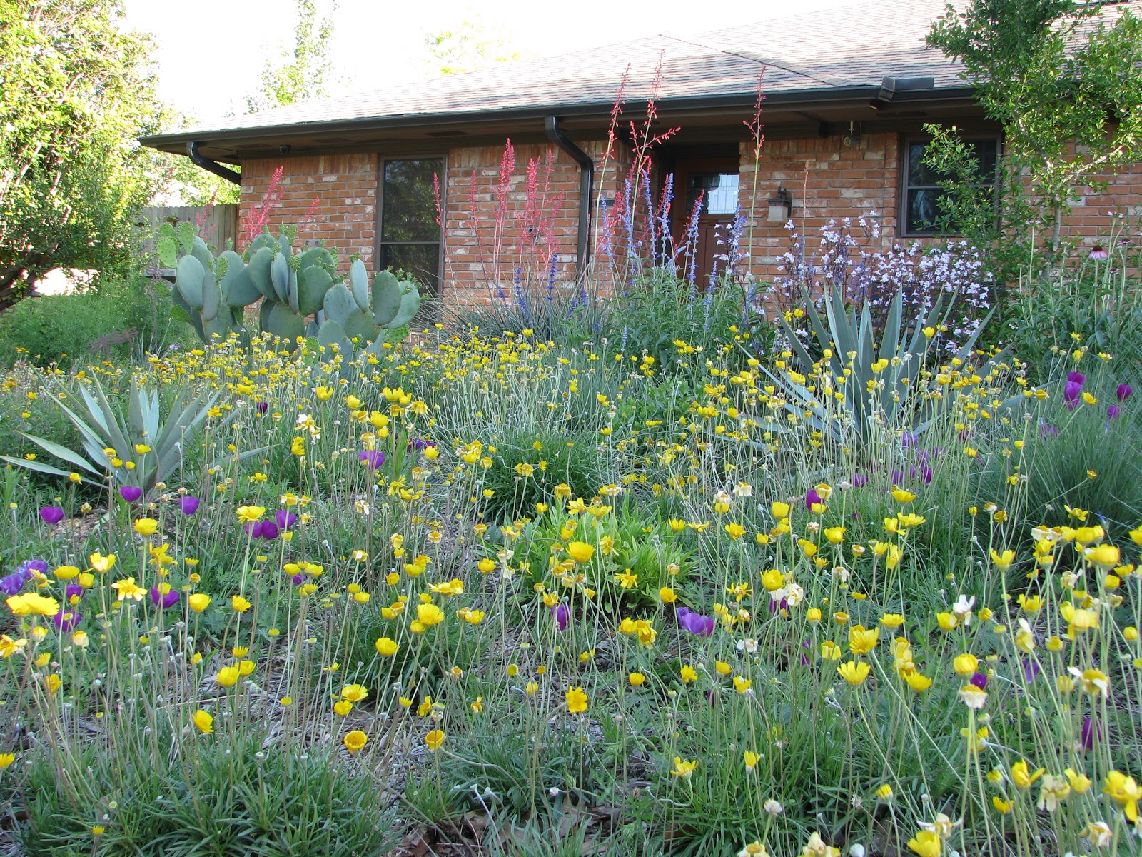 Plano prairie garden national wildflower week for Landscaping with native plants