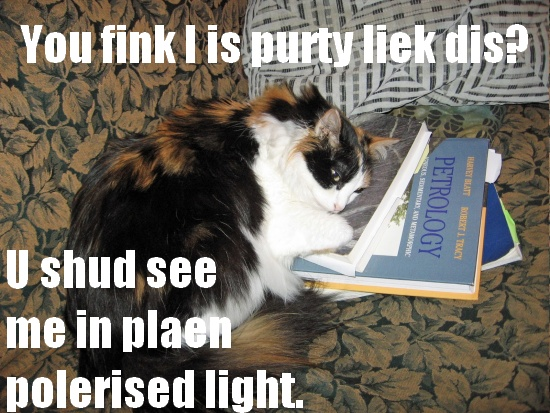 Image is a calico cat sleeping on petrology textbooks. Caption says,