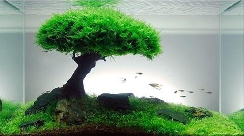 Cara Membuat Aquascape Murah dan Sederhana Untuk Pemula ...
