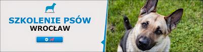 szkolenie psów wrocław