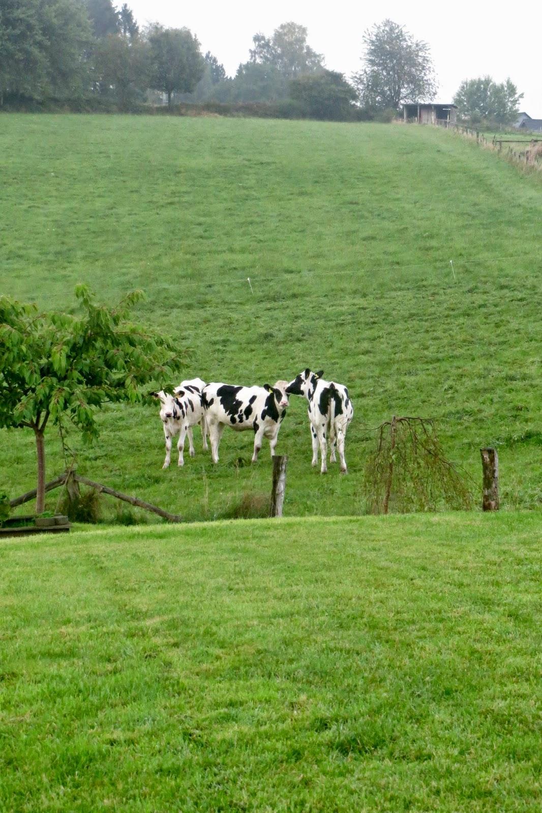 Blick über den Gartenzaun auf eine riesige Kuhwiese mit drei Kühen