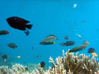 Terumbu Karang dan Ikan di Pulau Tidung
