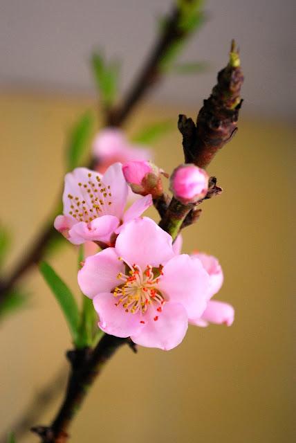 Hoa mới nở vẫn tươi nguyên tinh khiết
