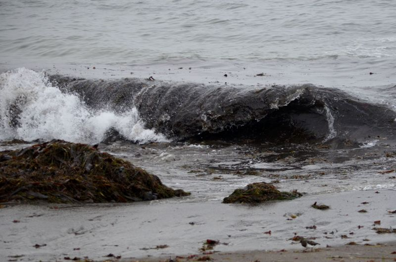Laguna Beach Wave Sounds