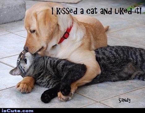 dog kissing a cat
