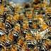 Crianças são atacadas por abelhas em escola na cidade de Aporá