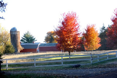 Autumn maples enhancing a red barn