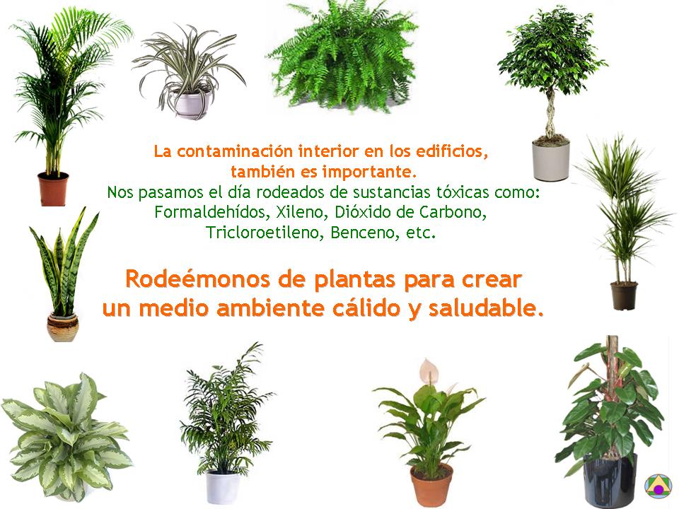 Blog de asteyma plantas que purifican el aire 1 for Plantas de aire