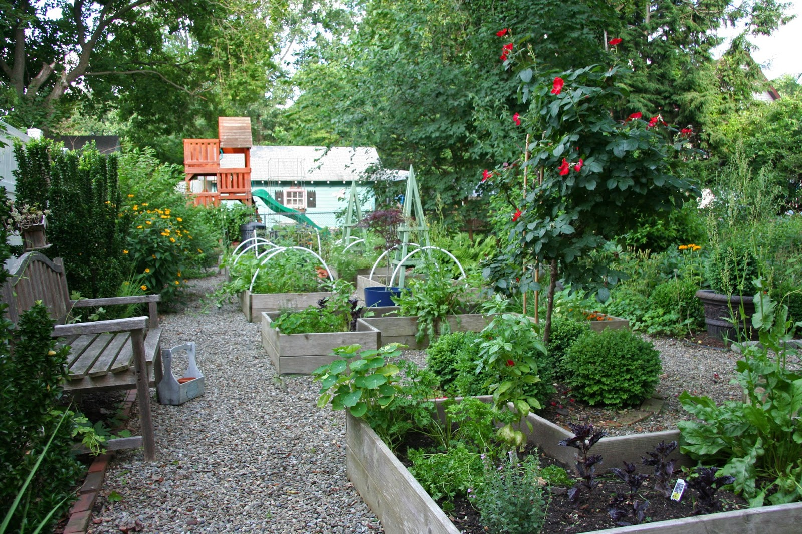 Beautiful kitchen gardens as usual my cilantro bolted for Beautiful kitchen garden designs