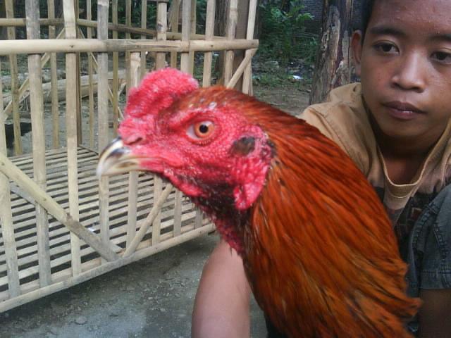 Jaya Karta Farm