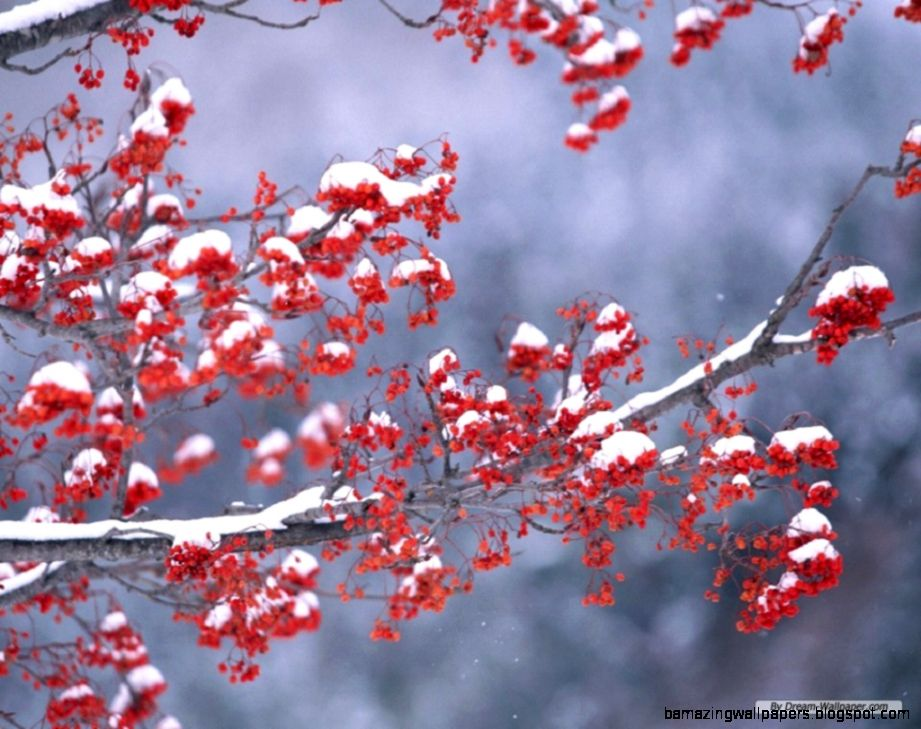 Free Wallpaper   Free Nature wallpaper   Season Winter wallpaper