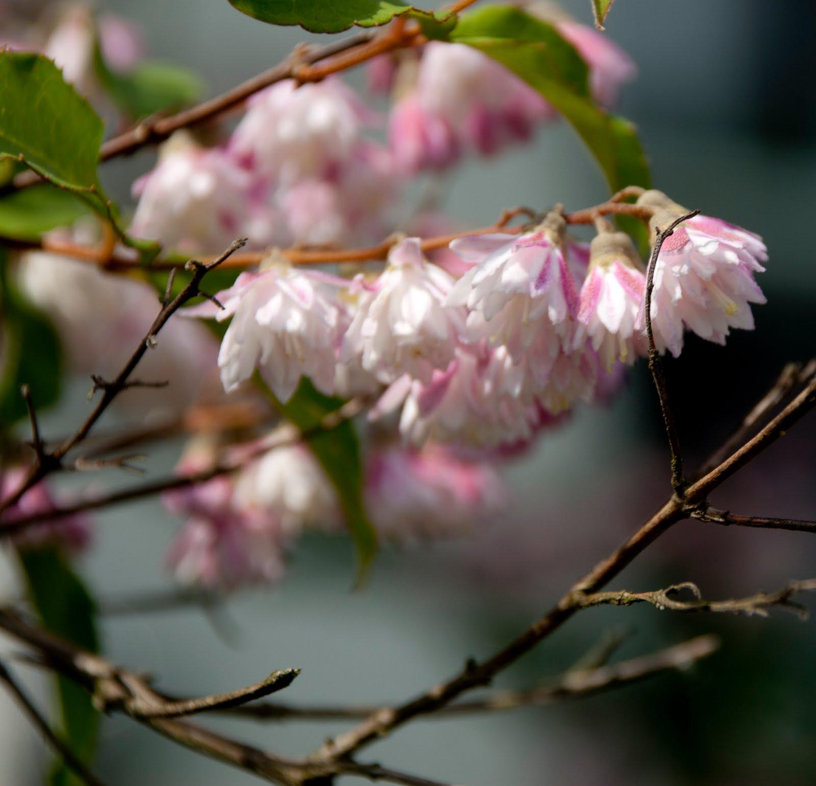 http://3.bp.blogspot.com/-Te-Az8bBuQI/TfkCWpj5WAI/AAAAAAAAJtU/EbnFg6RMyq4/s1600/Pink%2BBlur%2B06152011.jpg