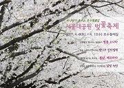 เทศกาลซากุระที่ Seoul Grand Park