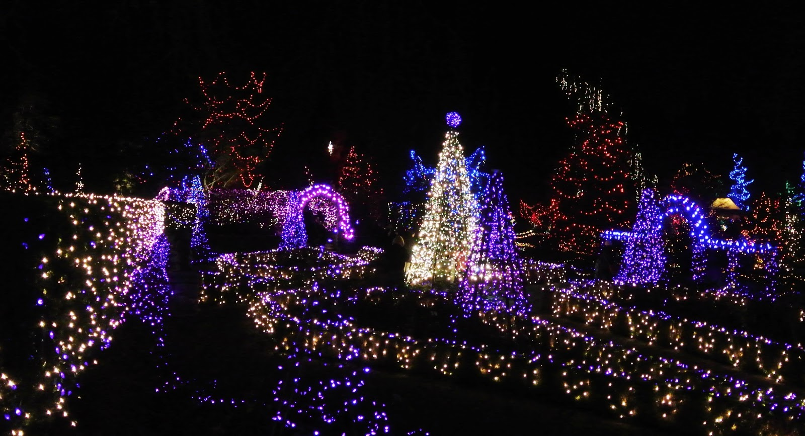 vivian - in stitches: Christmas Lights, Van Dusen Gardens