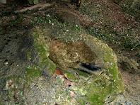 La bassa que recull l'aigua que regalima per l'interior de les parets de la Bauma de La Coma