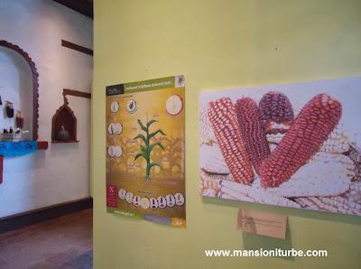 Exposición Temporal en Pátzcuaro sobre la Historia de Maíz