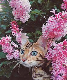 Qualche giorno è primavera