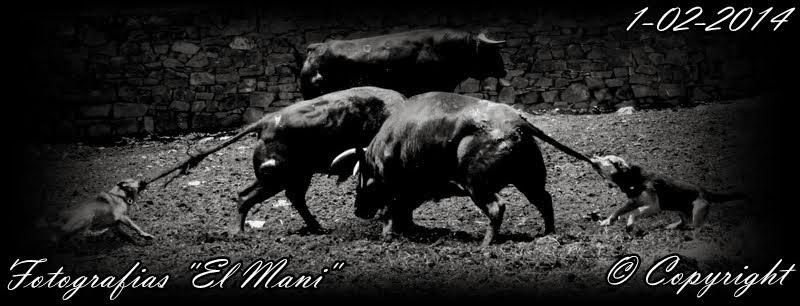 Fotografias: El Mani - Pictures