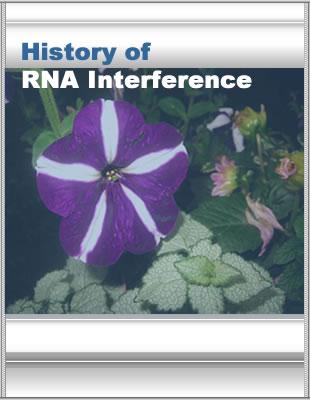 Http Www Nature Com Nrg Multimedia Rnai Animation Index Html