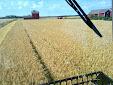 Harvesting in Finland