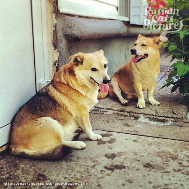 Just Instadogs Dog 02