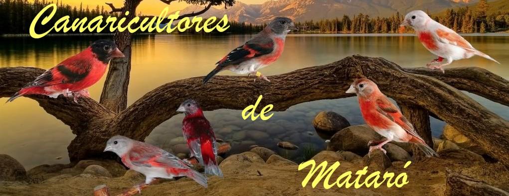 Canaricultores de Mataró