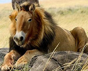 Imagenes Graciosas de Animales, León