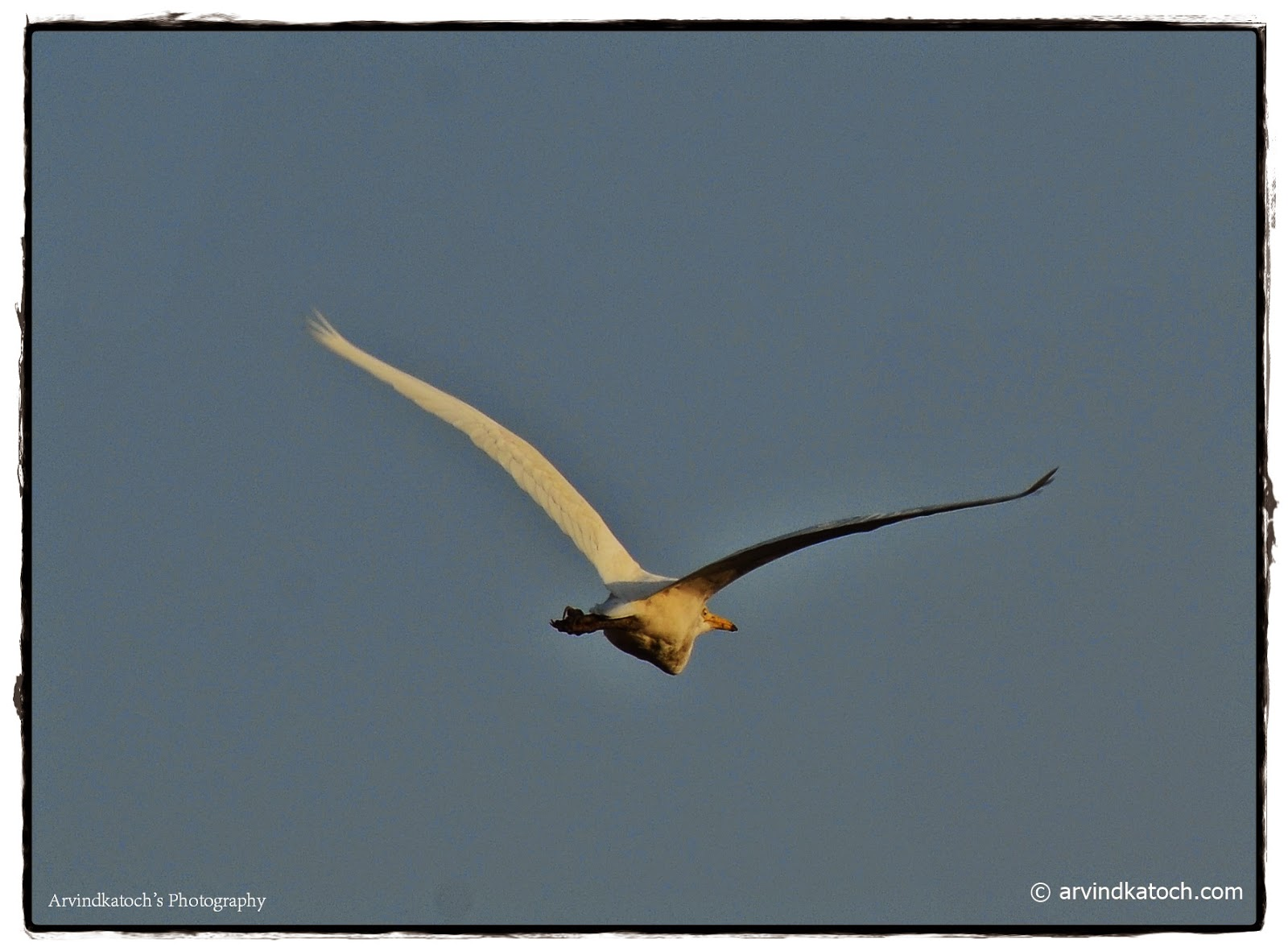 White Bird, Migratory Bird