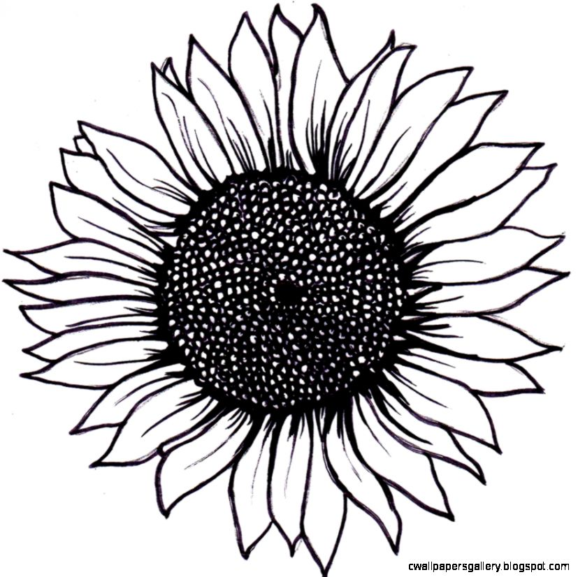1000 images about Sunflower Tattoo on Pinterest  Sunflower